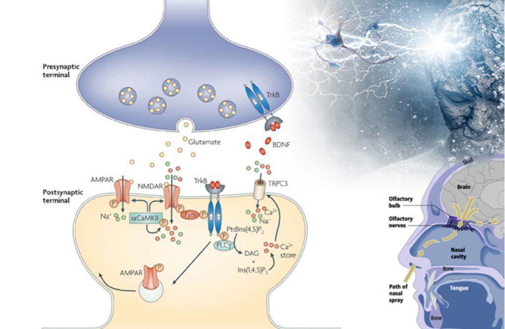 Biosens image 1