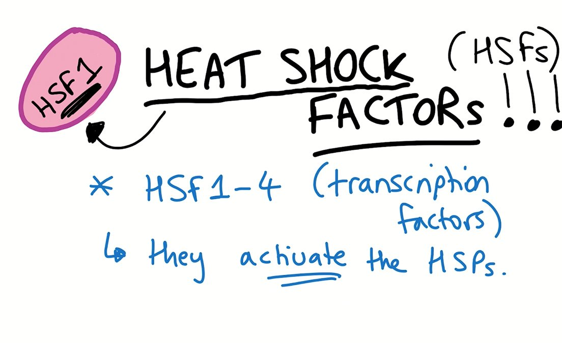Sheekey Science