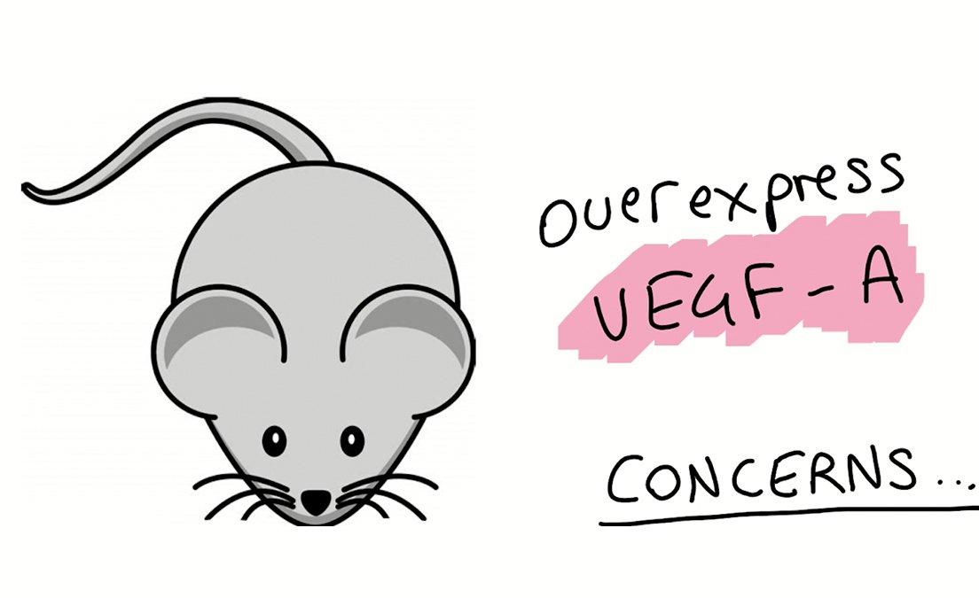 Sheekey Science Show