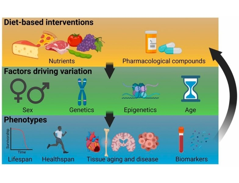 A framework for precision-nutrigeroscience based on optimizing diet/pharmacology based interventions to optimize health and longevity to accommodate factors that lead to individual variation.